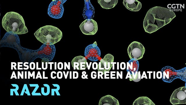 Resolution, revolution, animal COVID ...