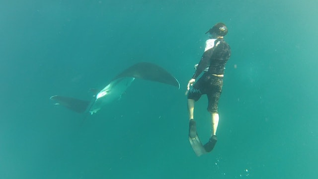 Protecting Giant Manta Rays