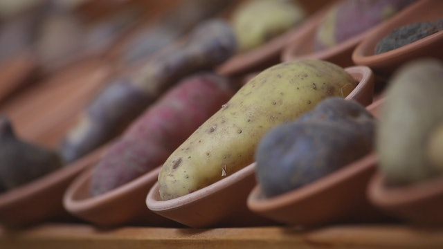 Peru's Potatoes adapt to every eco-system