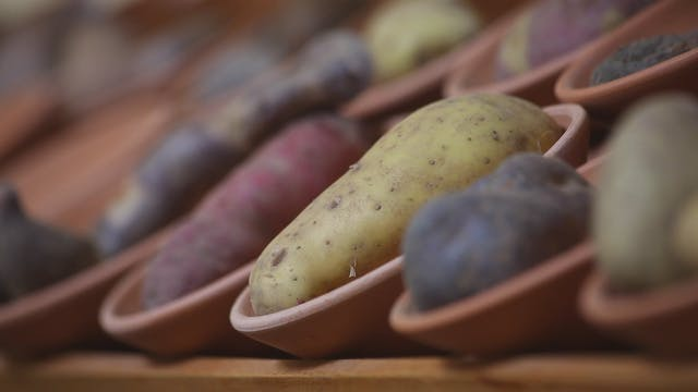 Peru's Potatoes adapt to every eco-sy...
