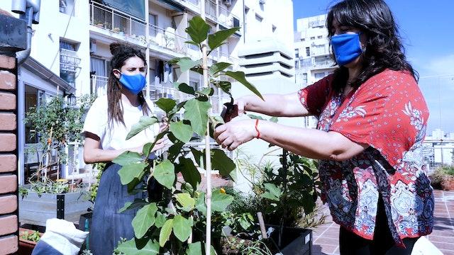 Becoming an urban gardener in Argentina
