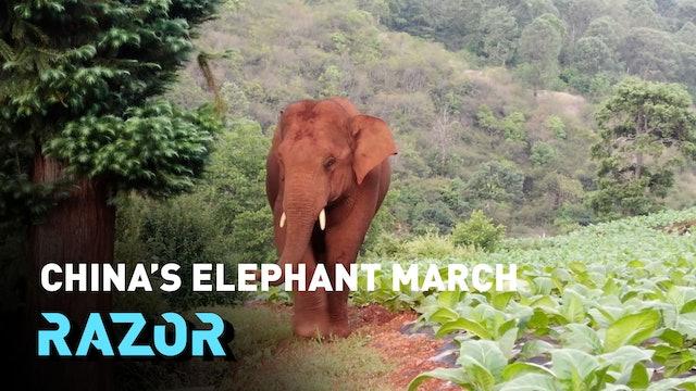 China's elephant march #RAZOR