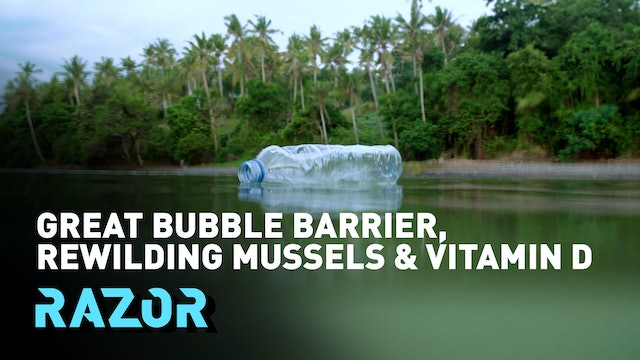 Rewilding mussels, the great bubble barrier and vitamin D vs COVID-19: RAZOR