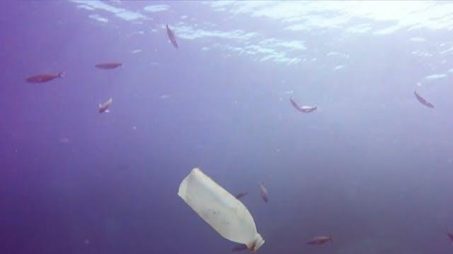 What happens to plastics in oceans?