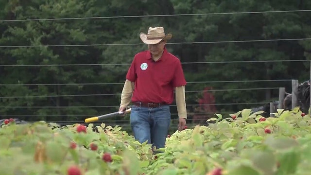 US-China trade war impacting American ginseng farmers