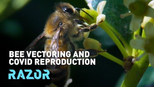 Bee vectoring and COVID reproduction ...