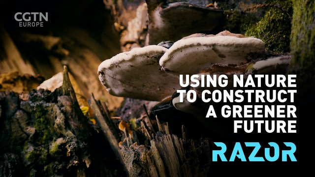 Using nature to construct a greener future - #RAZOR