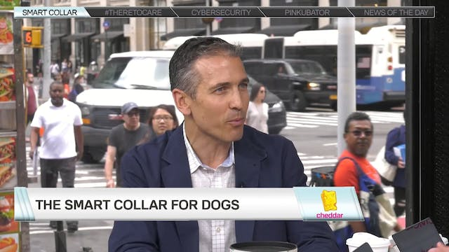 Link AKC is a Smart Collar for Your D...