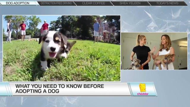 Dr. Katy Nelson, Freshpet & Animal Haven