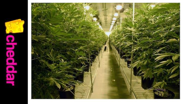 Banning Branded Marijuana Merchandise...