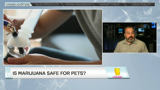 Is Pot Safe For Your Pet?