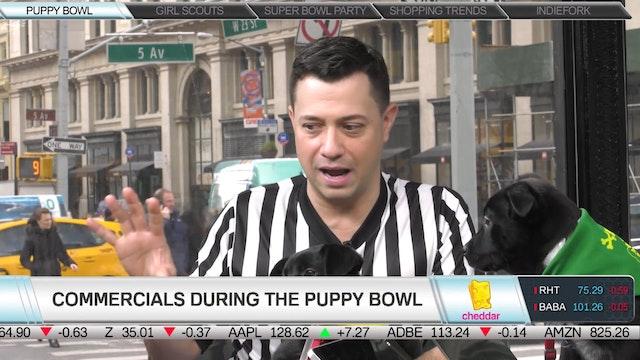 Meet Some Future Puppy Bowl Pups!
