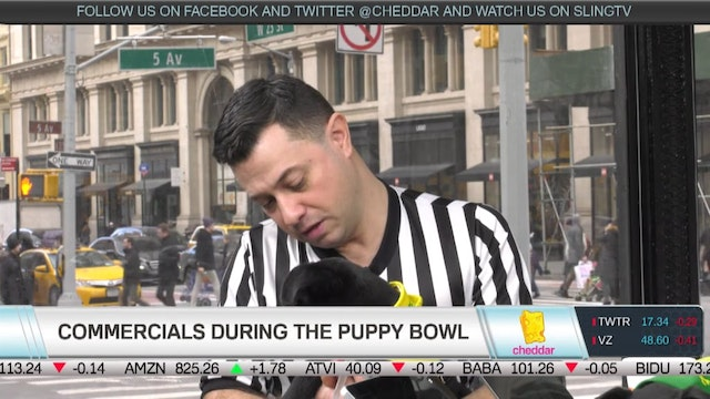 How Do Pups Train for Puppy Bowl?