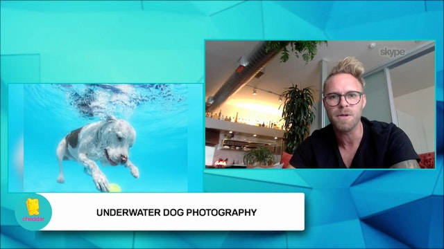 Seth Casteel teaches dogs how to swim!