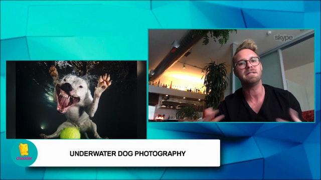 Seth Casteel teaches dogs how to swim!