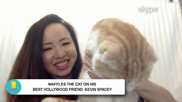 Waffles The Cat Lets Fame Goes to His...
