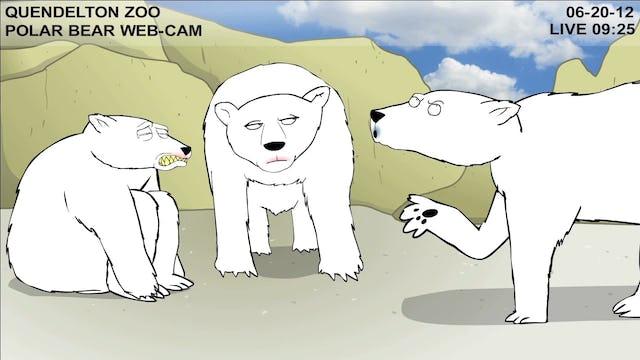 Teen Polar Bear Cam