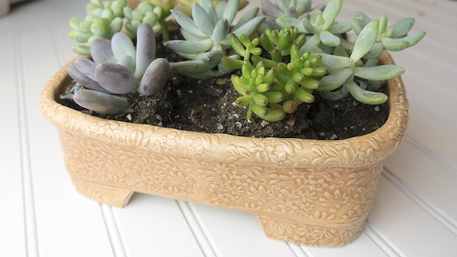 Succulent Tray Planter