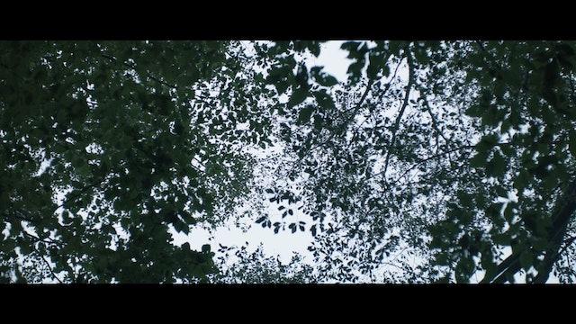 Breathe In - Trailer