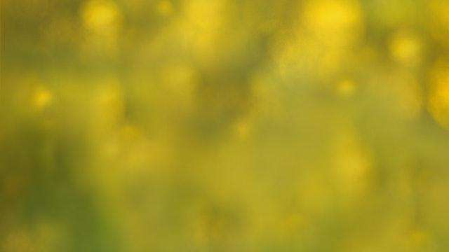 SK-|-YellowBokeh.jpg