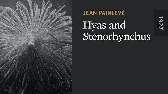 Hyas and Stenorhynchus