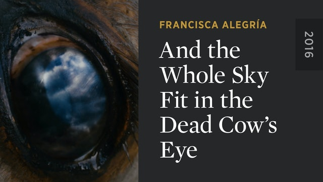 And the Whole Sky Fit in the Dead Cow's Eye