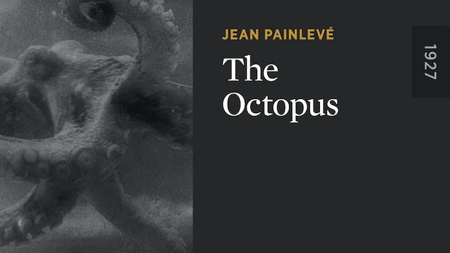 The Octopus