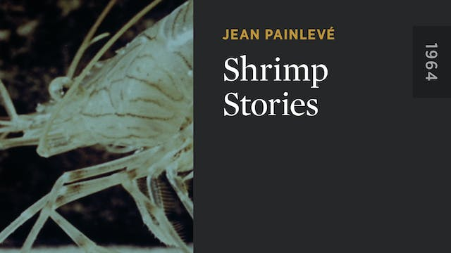 Shrimp Stories