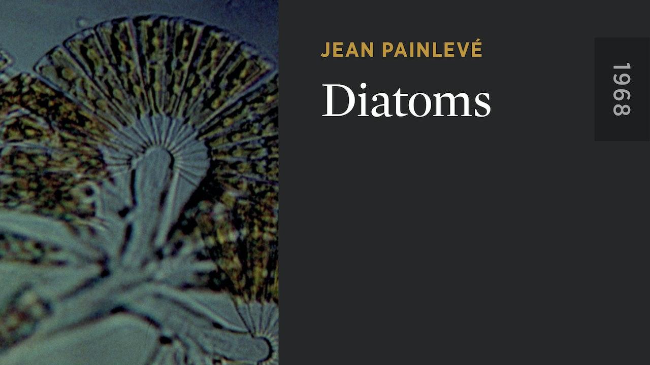 Diatoms