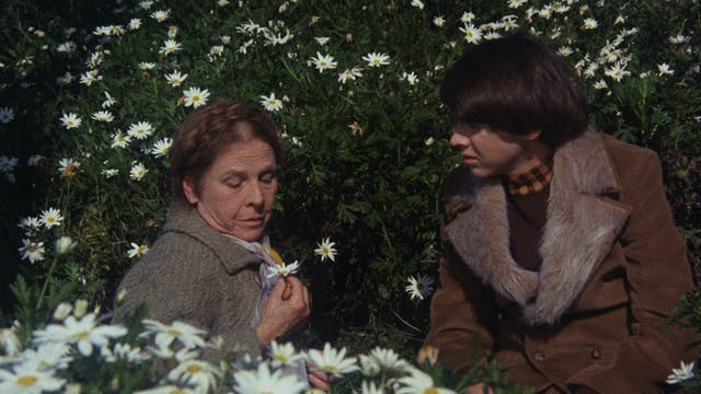 HAROLD AND MAUDE Commentary