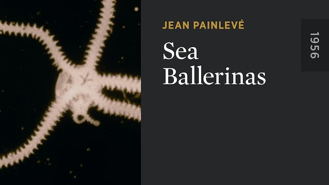 Sea Ballerinas