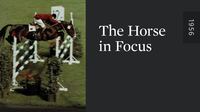 The Horse in Focus