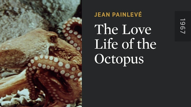 The Love Life of the Octopus