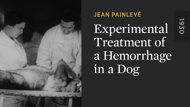 Experimental Treatment of a Hemorrhage in a Dog