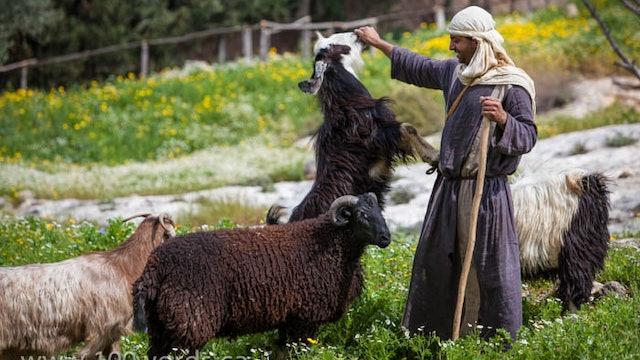 100 Words - YR1 October 26 - The Good Shepherd