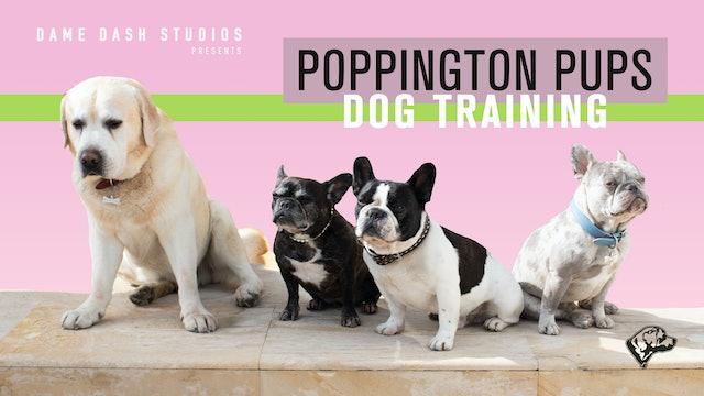 "Poppington Pups Dog Training-Episode 1 ""Off, Leave it, Quite"" !"