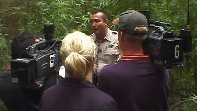 Sheriff: Marijuana