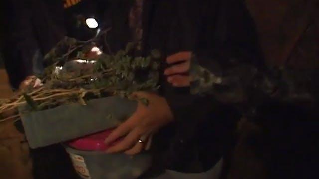 Sheriff: Marijuana 2