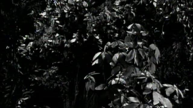 Episode 272