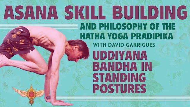 Uddiyana Bandha in Standing Postures