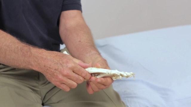 Deep Tissue Massage - An Integrated Full Body Approach: 18] Understanding The Mechanics Of The Foot