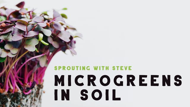 Microgreens In Soil Part 8