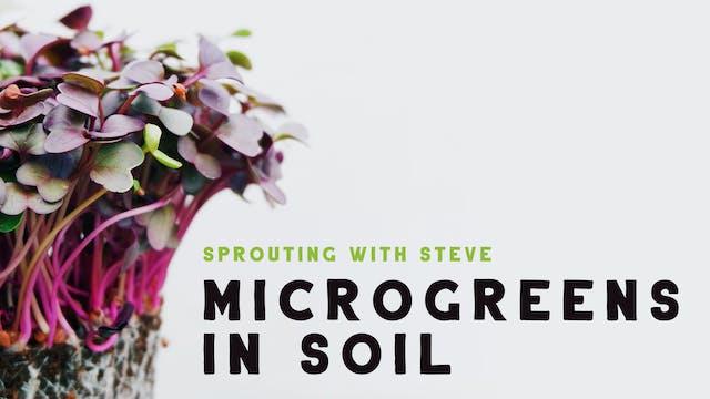 Microgreens In Soil Part 7
