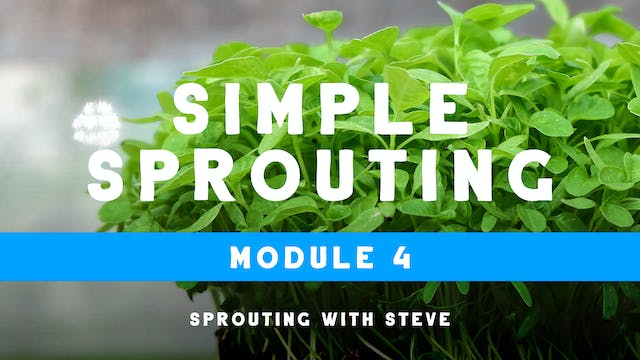 Simple Sprouting Mod 4:  LMP Day 4a