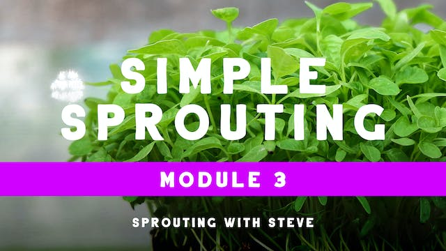 Simple Sprouting Mod 3:  Day 1