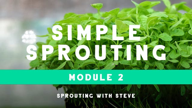 Simple Sprouting Mod 2:  BRG Day 1