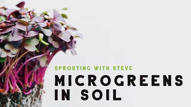 Microgreens In Soil Part 1
