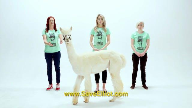 Evie's Alpaca PSA