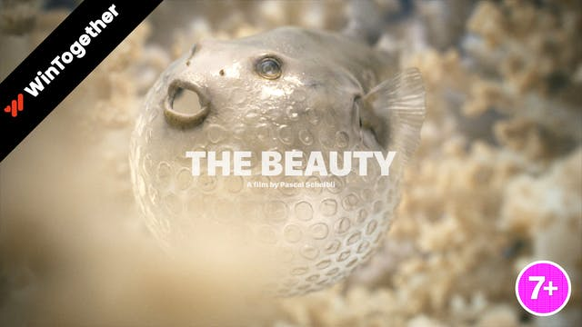 The Beauty