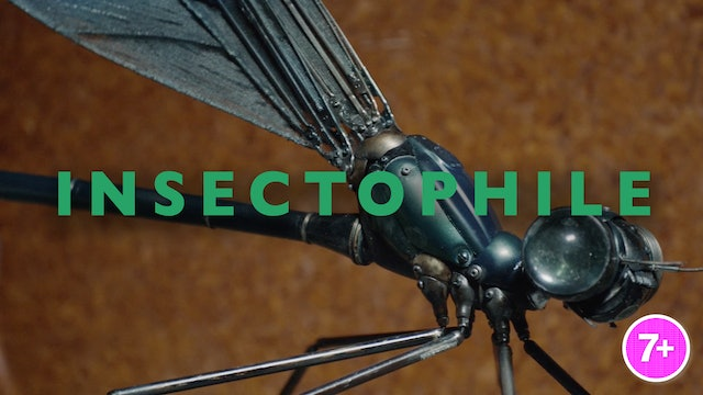 Insectophile